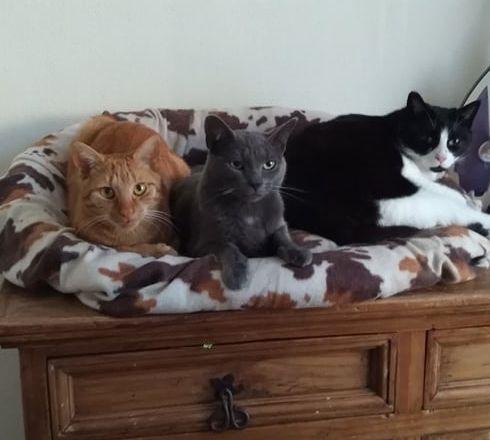 3 chats qui dorment