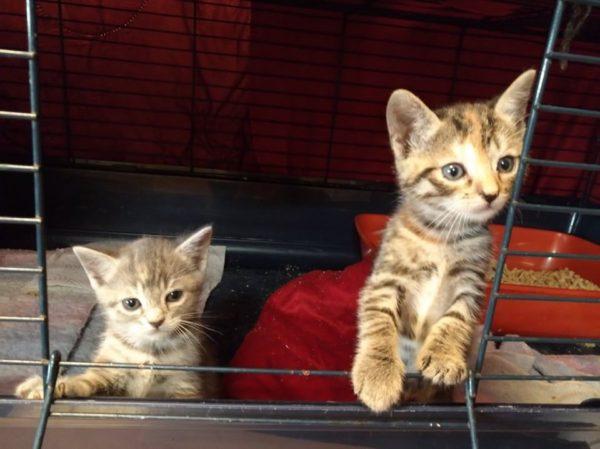 Deux chatons dans une cage