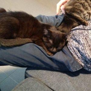 Chat noir couché sur un canapé