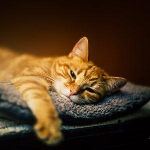 Canna endormie