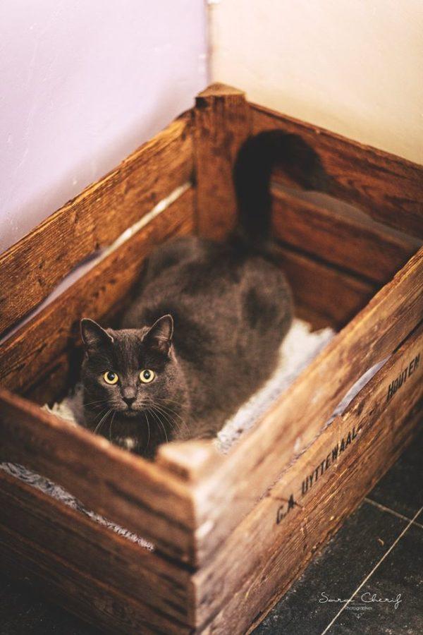 Chat dans une boite